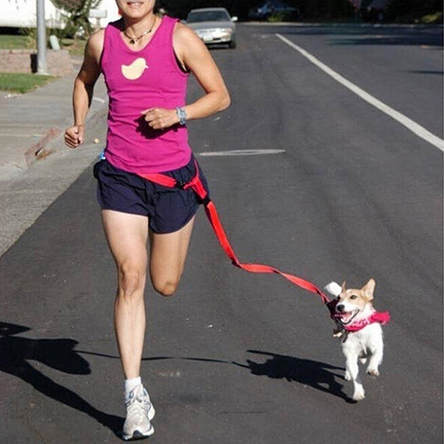 Running Dog Pet Products Acarreo Cable Cables Collares Correa de Tracción Cuerda