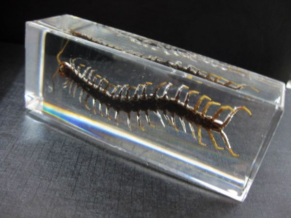 FREE SHIPPING Chinese in Clear Acrylic Lucite Paperweight Insect Artificial Large Centipede