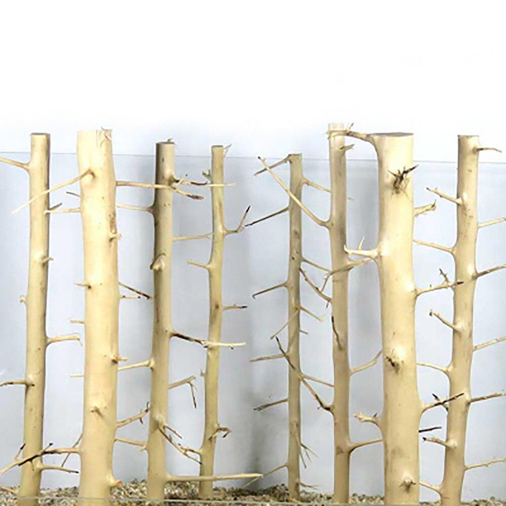 Shenmu forêt aménagement paysager Aquarium Aquarium réservoir d'herbe cylindre salon décoration aiguille bois tumeur bois épine bois