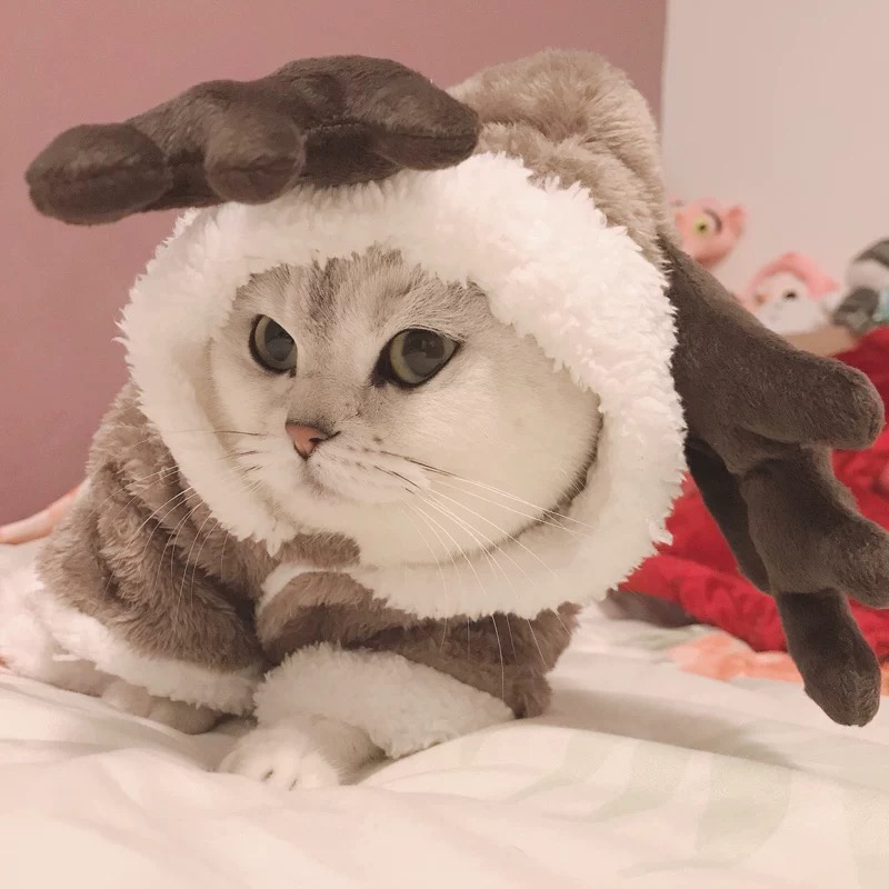 Warm Cat Dear Coat 1