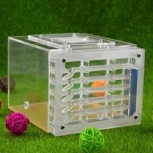 Ant Корпус Гнездо Насекомых Клетке Фермы Rss Корзины Пластиковые Акриловые Отображения Квадрата