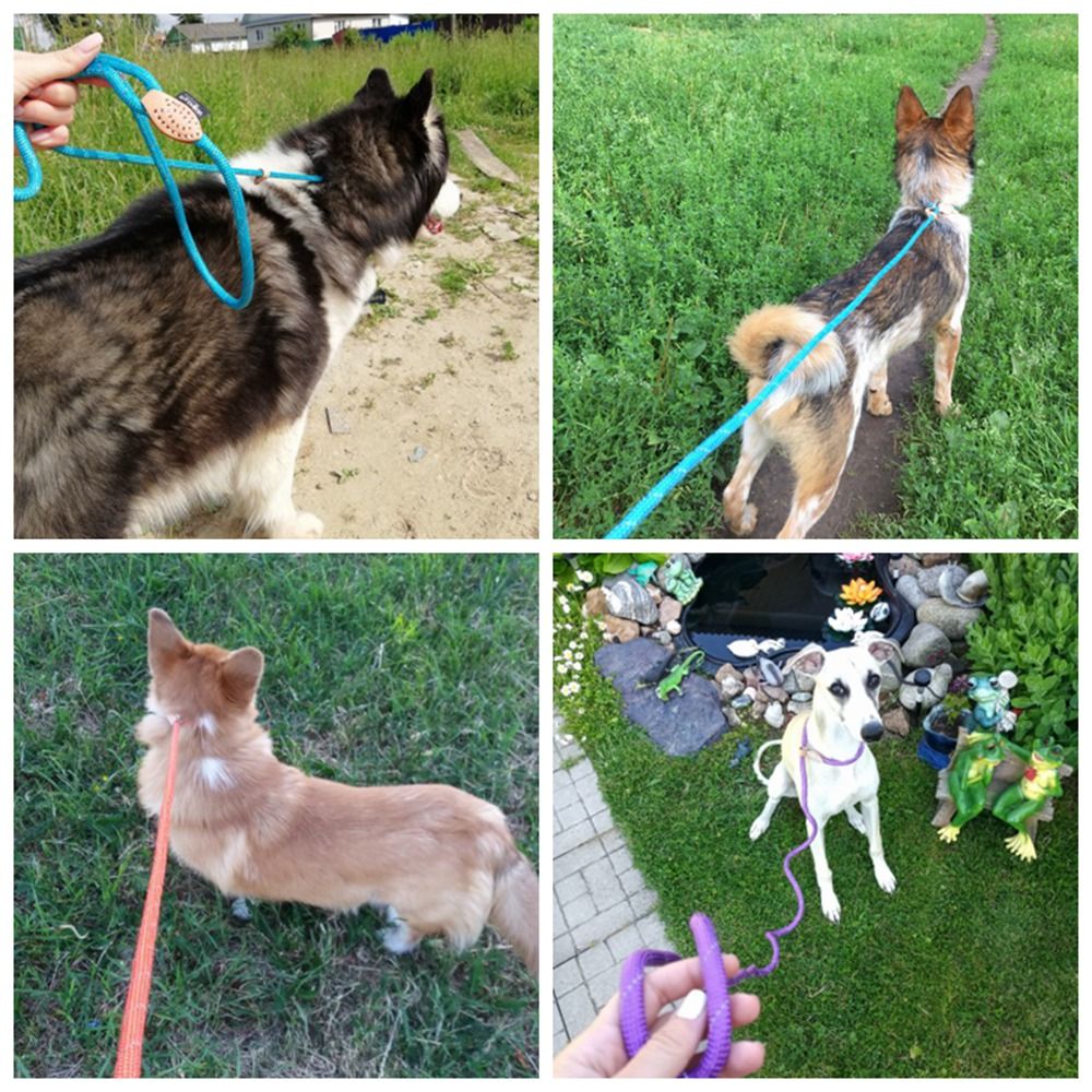 Pet Products Dog Leash Nylon Reflective Puppy Dog Leash Rope Cat Chihuahua Pet Leash And Collar Set Cat Dog Leashes Lead Harness (37)