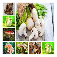 Big Sale 500 Pcs Delicious White Mushroom bonsai Green Vegetables Bonsai plant Very Easy To Grow For Home(China)