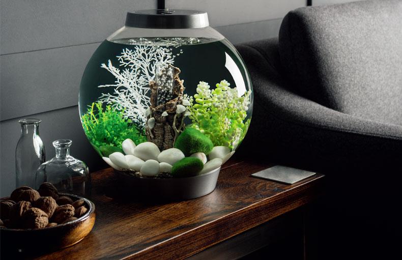 OASE biorb británico original tanque de peces bailarín español adorno acuario arte paisajismo Decoración elegante y hermosa blanca - 5