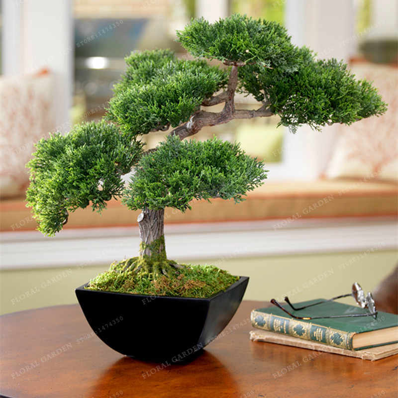 Best-Selling!Japanese Mini Ornamental Potted Pine plant Osaka Bonsai Pine Tree plant 50 particles / lot,Home Garden