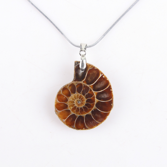 Natural nautilus ammonite pendant conch chain shell pendant for natural nautilus ammonite pendant conch chain shell pendant for necklace jewelry crafts ornaments gifts aloadofball Images
