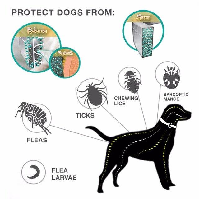 Anti Flea and Tick Collar for French bulldogs