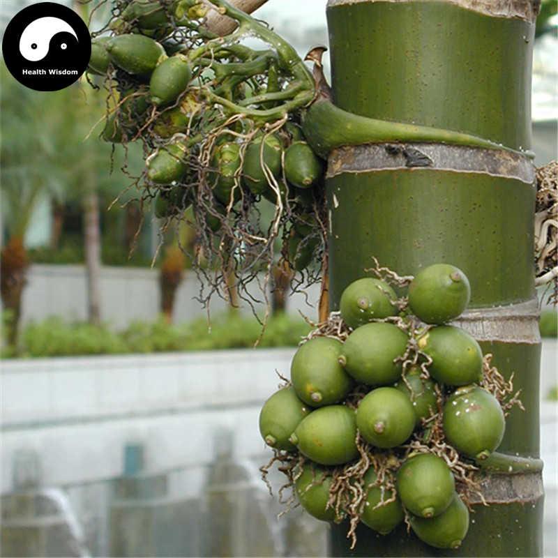 Buy Areca Catechu Tree Semente 6pcs Plant Chinese Evergreen Tree Betel Nut