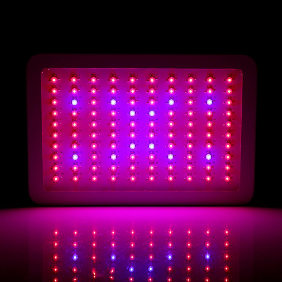 1000W Grow LED for Plant Full Spectrum LED Plant Grow Light Veg Lamp Indoor Greenhouse Garden With Switch 10pcs red maple seeds garden indoor beautiful potting plant