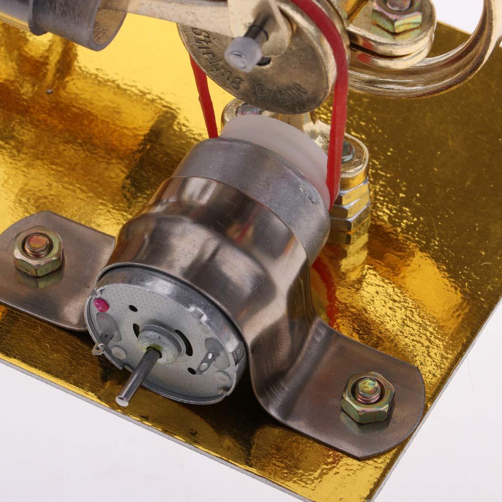 Air chaud 2 cylindres Stirling moteur générateur de vapeur modèle physique expérience Science apprentissage jouets éducatifs cadeau pour les enfants - 4