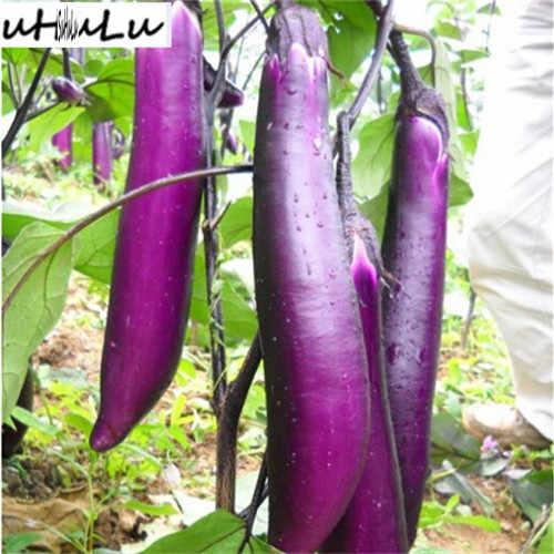 100 шт Редкие баклажаны бонсай, цветочные горшечные растения, садовые фруктовые деревья, южные Соединенные Штаты, бонсай сладкие фрукты легко выращивать