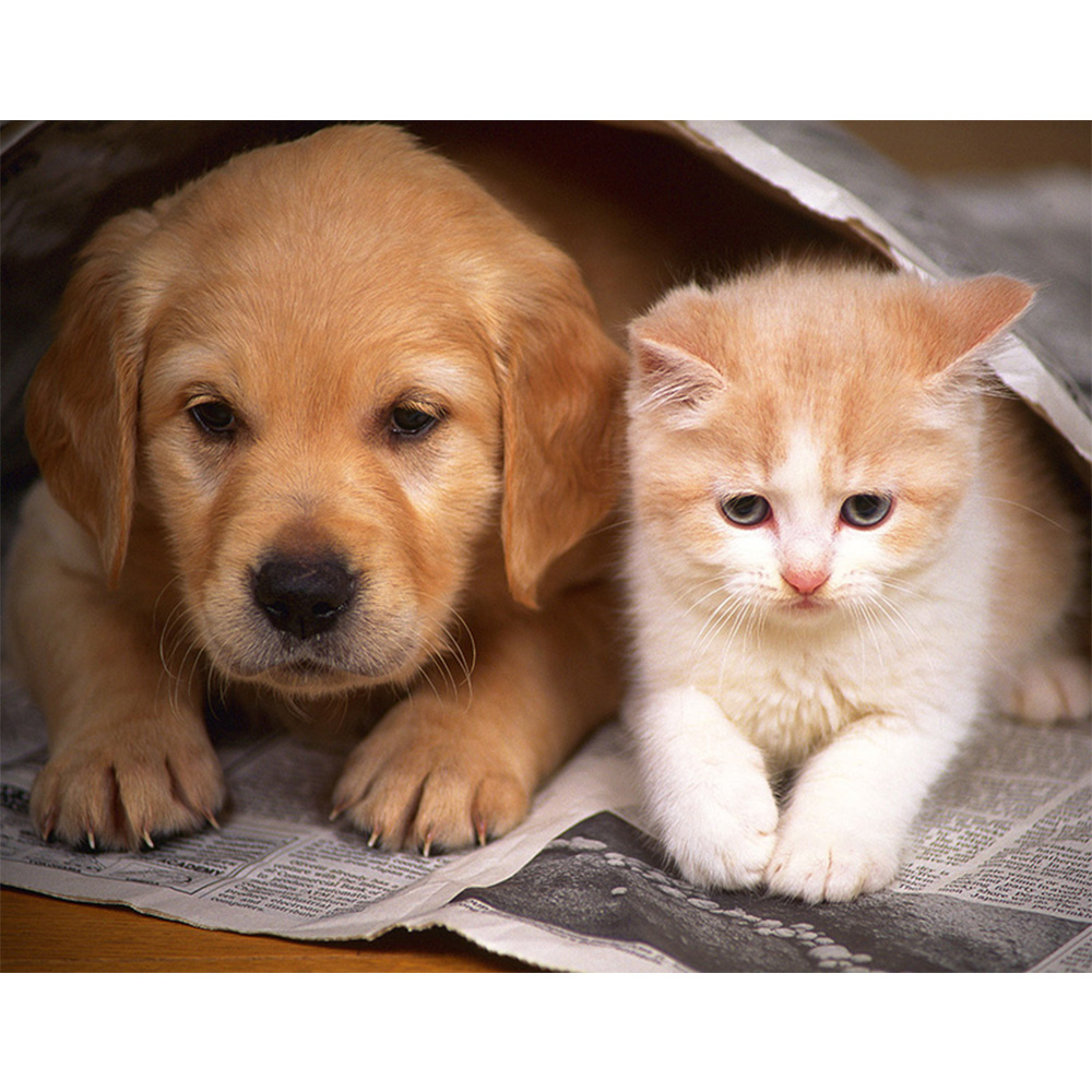 следы картинки на тему котята и щенята корпусные стенки