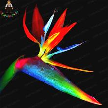 100% True Rainbow Strelitzia Reginae Seed Bird Of Paradise Seeds Indoor Potted Plants Flowers For Garden Bonsai Semillas 100pcs