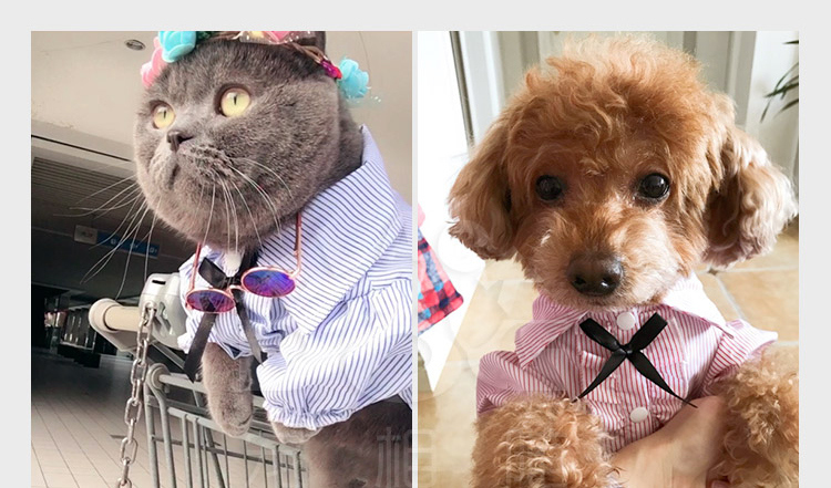 PipiFren Cats Clothes Clothing Small Dogs T Shirts Colorful Cheap Cute Fashion Clothes For Pets Costume blusao Vetement chien 6