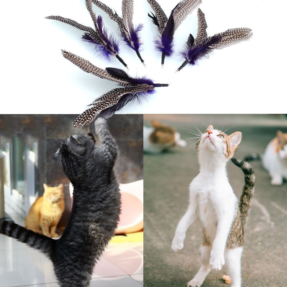 5 X Replacement Refill Feather for Kitten Cat Toy Wand Teaser Pole New