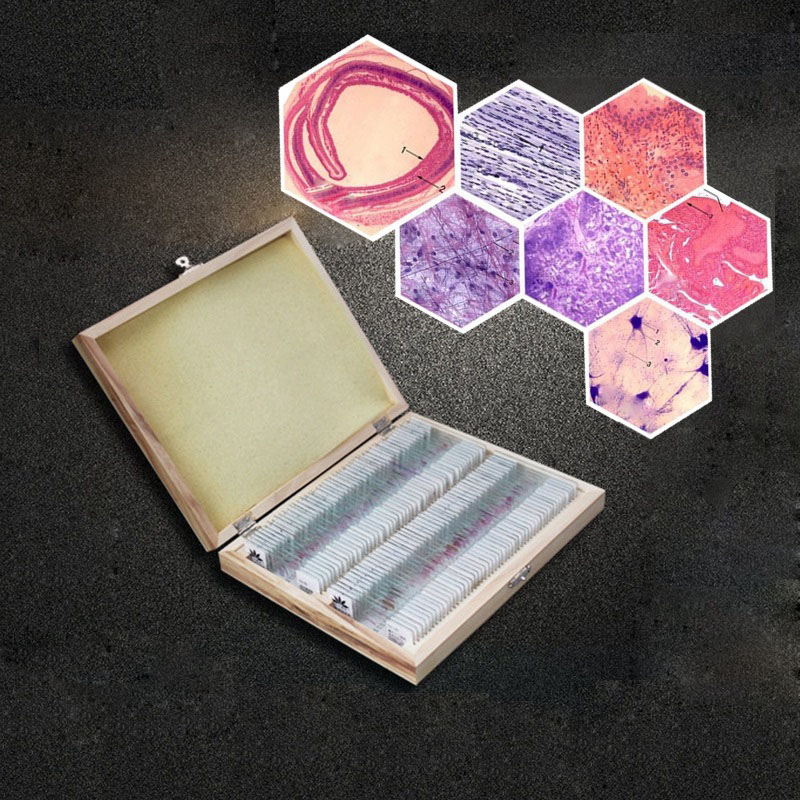 100PCS Human Histology and Embryology Prepared Physiological Slices Specimen Scetion Microscope Slides for Medical Study