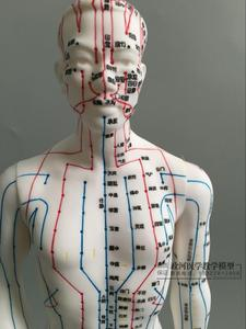 Image 3 - Human Body Acupuncture Model Male Meridians Model Chart Book Base 50cm