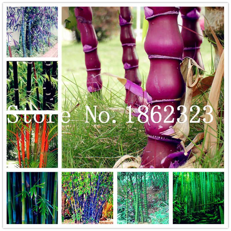 جديد الملونة الخيزران بونساي ، بونساي موسو شجرة النباتية لل ديكور حديقة المنزل بوعاء مصنع مصنع الجملة 30 قطعة شحن مجاني