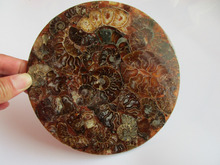 Natural  Fossil specimen compass Chakra Healing Reiki Stone Carving Crafts Furnishing articles with base from Madagascar