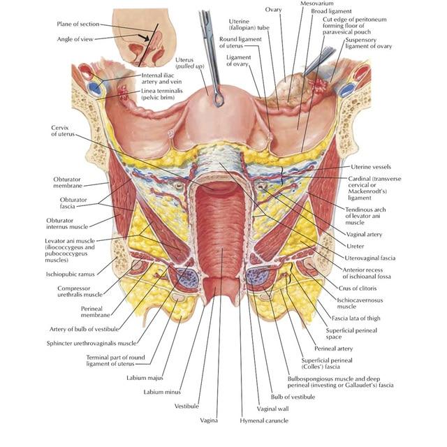 J0864 Menschlichen Körper Struktur Anatomie Diagramm Pop 14x21 24x36 ...