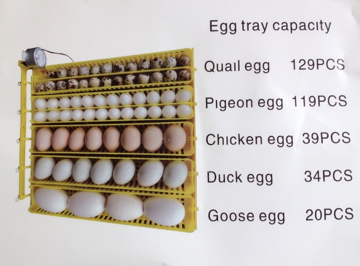 Quail Bird Poultry Eggs Automatic Incubator Tray Equipment  Automatically Turn Egg Tray Incubation Equipment 48 eggs tray automatic incubator egg tray chickens ducks and other poultry