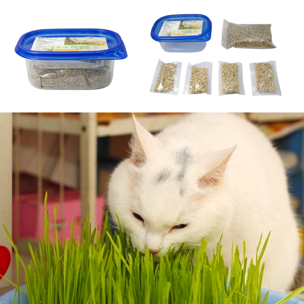 Green Digestive Cat Grass Seeds Foliage Plant Seeds Wheat Grass Seed Bonsai Grass Wholesale 1 Set