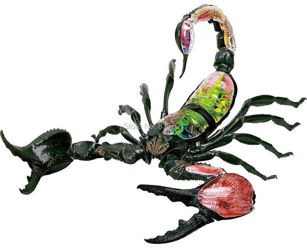 Fantastisch Skorpion Innere Anatomie Ideen - Menschliche Anatomie ...