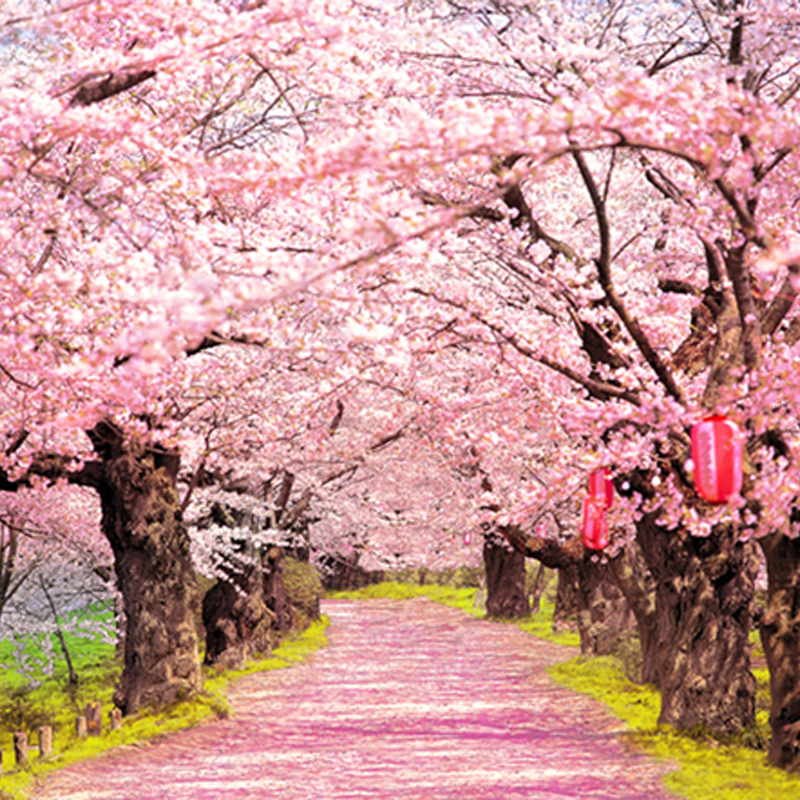 Blush Pink Flowers Old Trees Beautiful Road Natural Photography Backdrops For Photo Studio Wedding Background 150cm 200cm Photography Backdrops Backdrops For Photosroad Nature Aliexpress