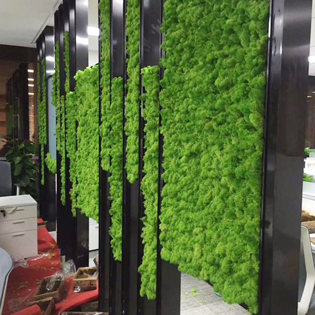 High quality artificial green plant immortal fake flower Moss grass home living room decorative wall DIY flower mini accessories 4