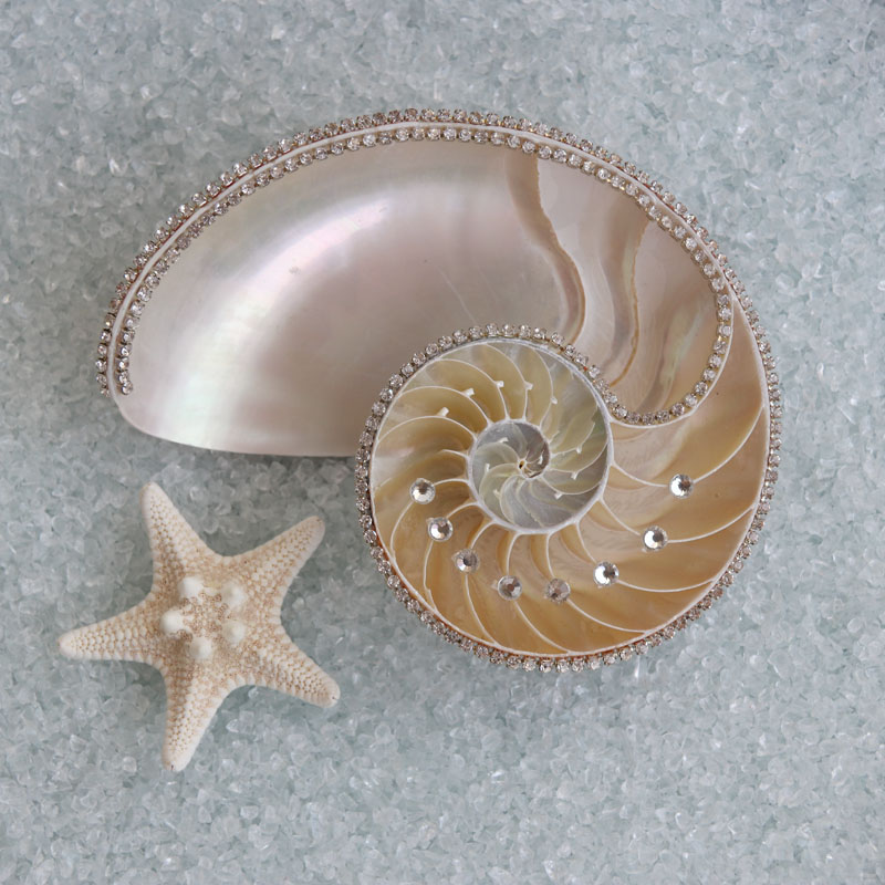 Free Shipping(1pcs/set)Custom Handmade Natural Diamond Nautilus Beach Wedding&Party&Holiday&Christmas Decor Party Favors