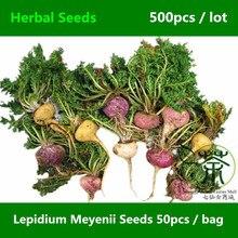 Herbaceous Biennial Lepidium Meyenii Seeds 500pcs, Peruvian Ginseng Root Vegetable Seeds, Very Popular Medicinal Herb Maca Seeds