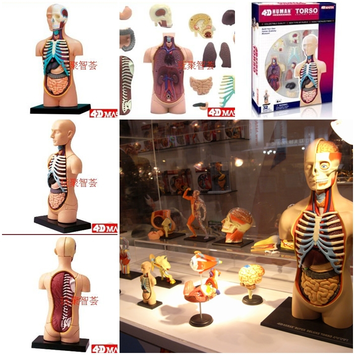 4d Master Human Body Structure Medical Model Educational Toy For
