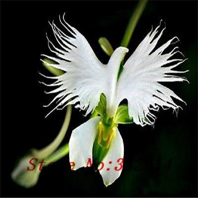 online kaufen gro handel orchidee blume pflanze aus china. Black Bedroom Furniture Sets. Home Design Ideas