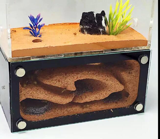 2 Zimmer Ant Vogelnest Transparent Ant Haus Für Kinder Hause Haustier Verwenden Student Wissenschaftliche Gerät Spielzeug Ant Acryl Villa Bauernhof Mit Werkzeug Set