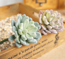 for artificial docoration Succulents