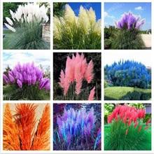400 pcs/ pampas grass, rare reed flower Bonsai Grass Pampas Plants are very beautiful decorative garden plant