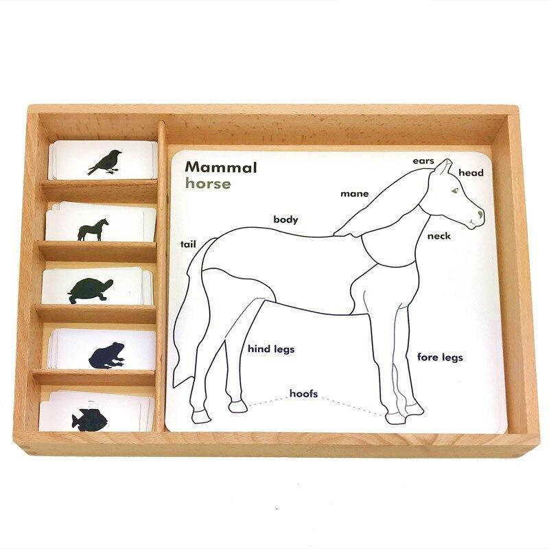 Montessori langue matériaux 3 pièces carte animaux croissance cartes apprentissage éducatif en bois jouets Juguetes Montessori E2864H
