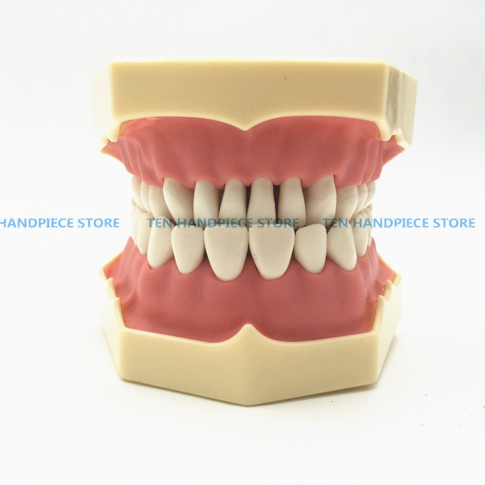 2018 Good quality Dental Soft Gum Teeth Model with tougneTypodont w/ 32 Removable Teeth NISSIN 200 Compatible free shipping good quality dental soft gum teeth model with tougnetypodont w 32 removable teeth nissin 200 compatible