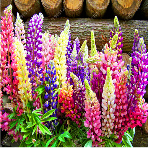 Online Buy Wholesale flower lupine from China flower ...
