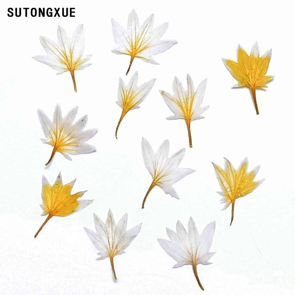 1 Box Mixed Dried Flower 3D Nail Decoration DIY Preserved Flower Manicure Nail Art Decoration