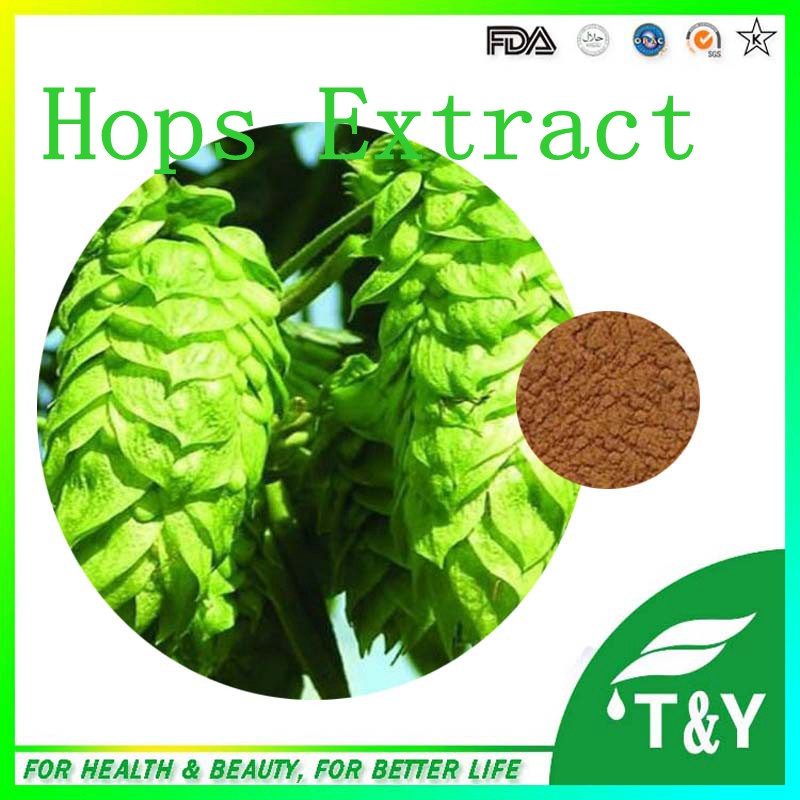 Pure Natural hops extract/beer hops/beer hops price 800g