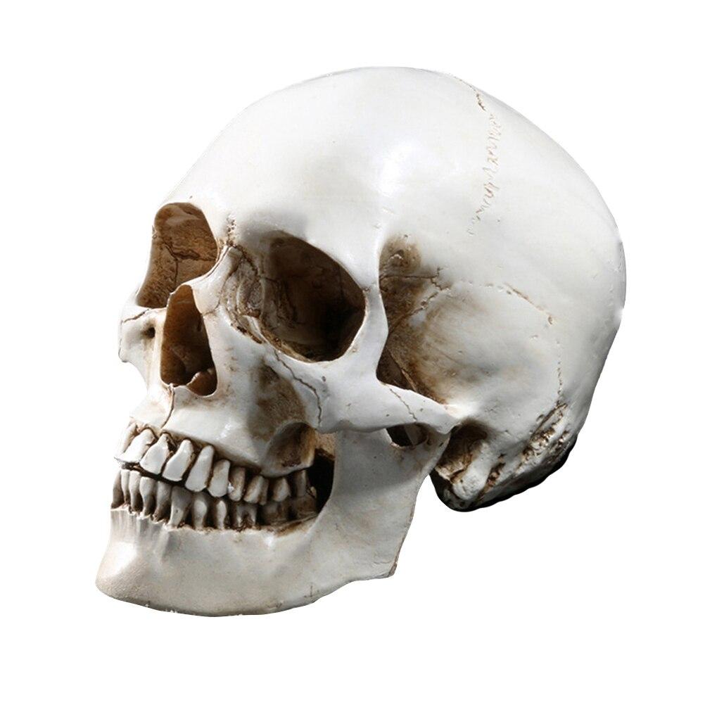 Lifesize 11 Menschlichen Schädel Modell Replica Harz Medizinischen Anatomischen Tracing Medizinische Lehre Skeleton Halloween Dekoration Statue