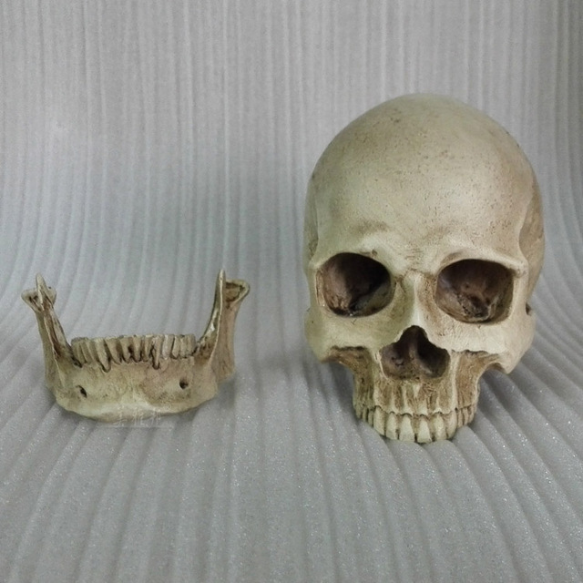 1:2 Human Skull Model Resin Skeleton Model Painting Human Skull Art Musculoskeletal Anatomy Art Model Free Shipping