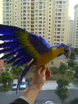 big blue&yellow simulation parrot toy polyethylene & furs wings parrot doll gift about 45x60cm 1932