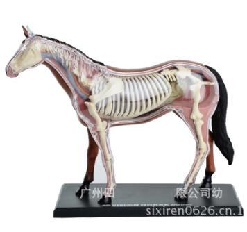 4D maître cheval spécimen modèle d'anatomie squelette organe modèle d'assemblage statique matériel d'enseignement vétérinaire