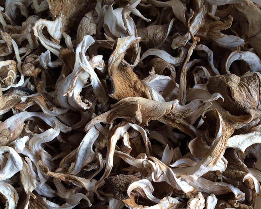 Oyster Mushroom2