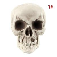 Настоящий череп #4