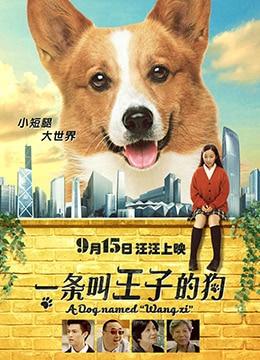 《一条叫王子的狗》2016年中国大陆,香港剧情,喜剧电影在线观看