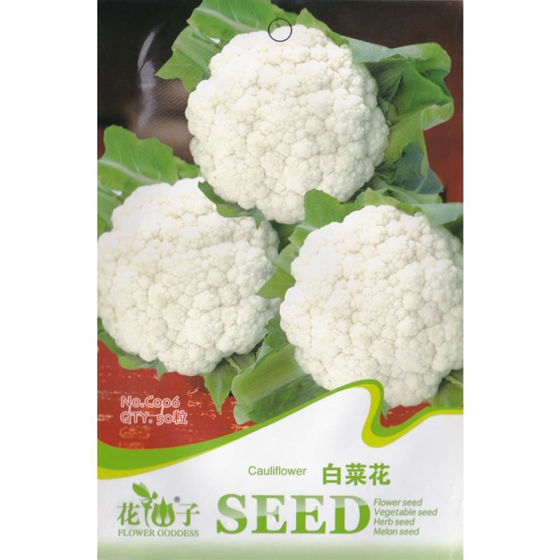 White cauliflower seed 1 packet 50 seeds brassica oleracea white cauliflower seed 1 packet 50 seeds brassica oleracea botrytis group heirloom cauliflower vegetable in bonsai from home garden on mightylinksfo