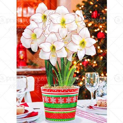 100pcs Blue Hippeastrum Flower Bonsai Plants (not bulbs) Perennial Indoor Flowering Potted Big Flower Home Garden 1